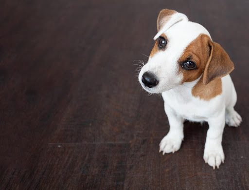 What Are the Best Breeds and Pets for Anxiety?